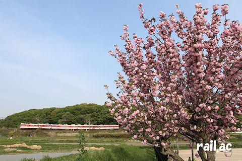 遅咲きの桜の向こうを行く1100形