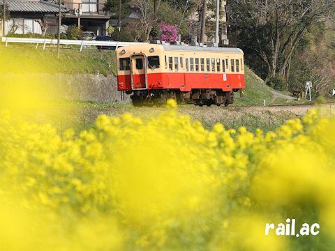 春の小湊鐵道(2014年3月)